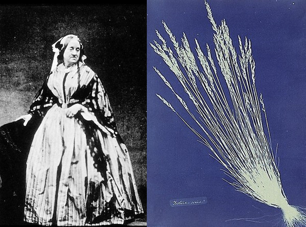 The First Female Photog Was an English Botanist Who Made Cyanotypes of Plants annaatkinsheader