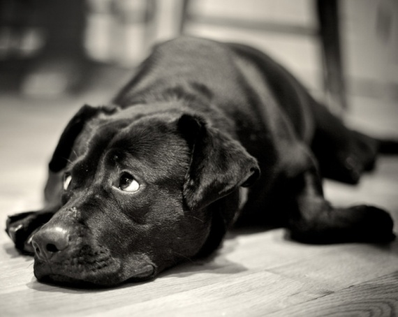 """""""Tired"""" captured by Stephen Pacinelli"""
