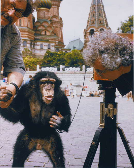 Chimpanzee Photographers Work Sells For Over $  75,000 at Auction monkeyteach3