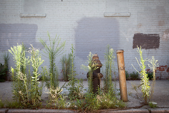 """""""Fire Hydrant and Weeds, Brooklyn"""" captured by James Maher."""