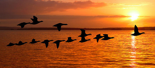 Image result for flying birds in chorus images