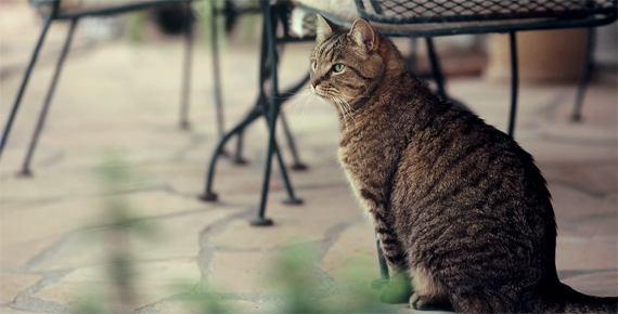 develop digital cat agfa fuji
